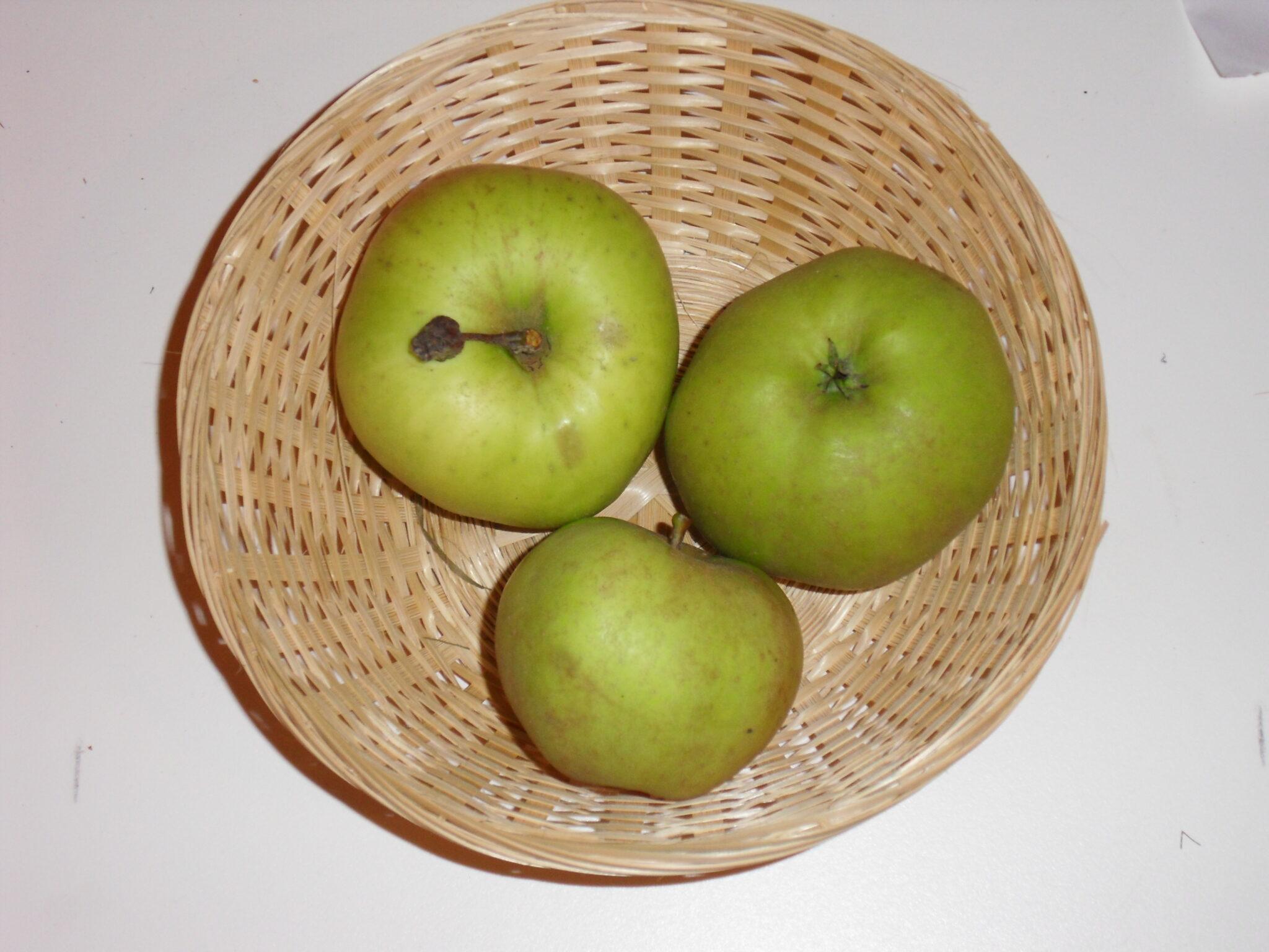 Canada blanc (fruit).