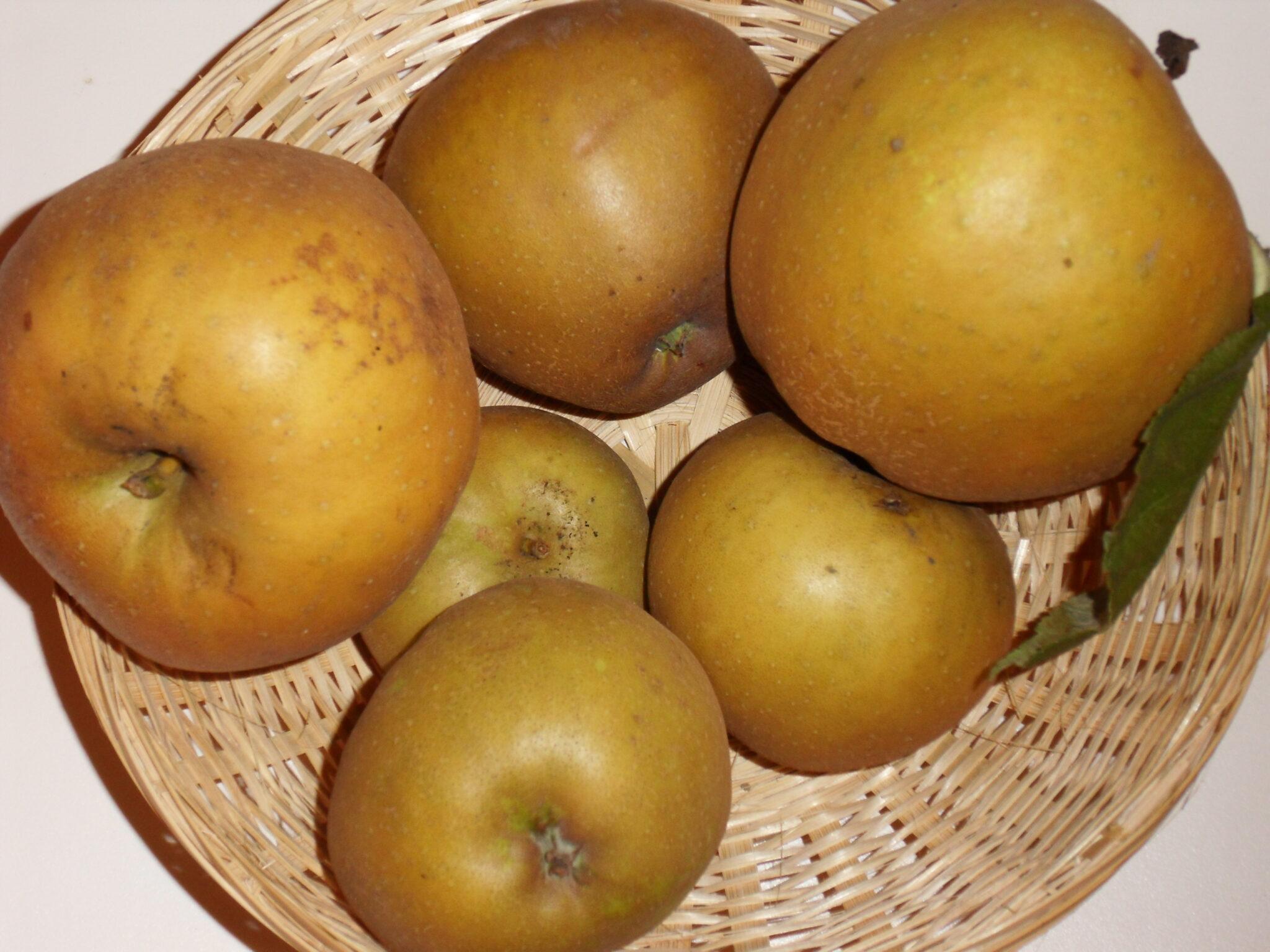 Canada gris (fruit).
