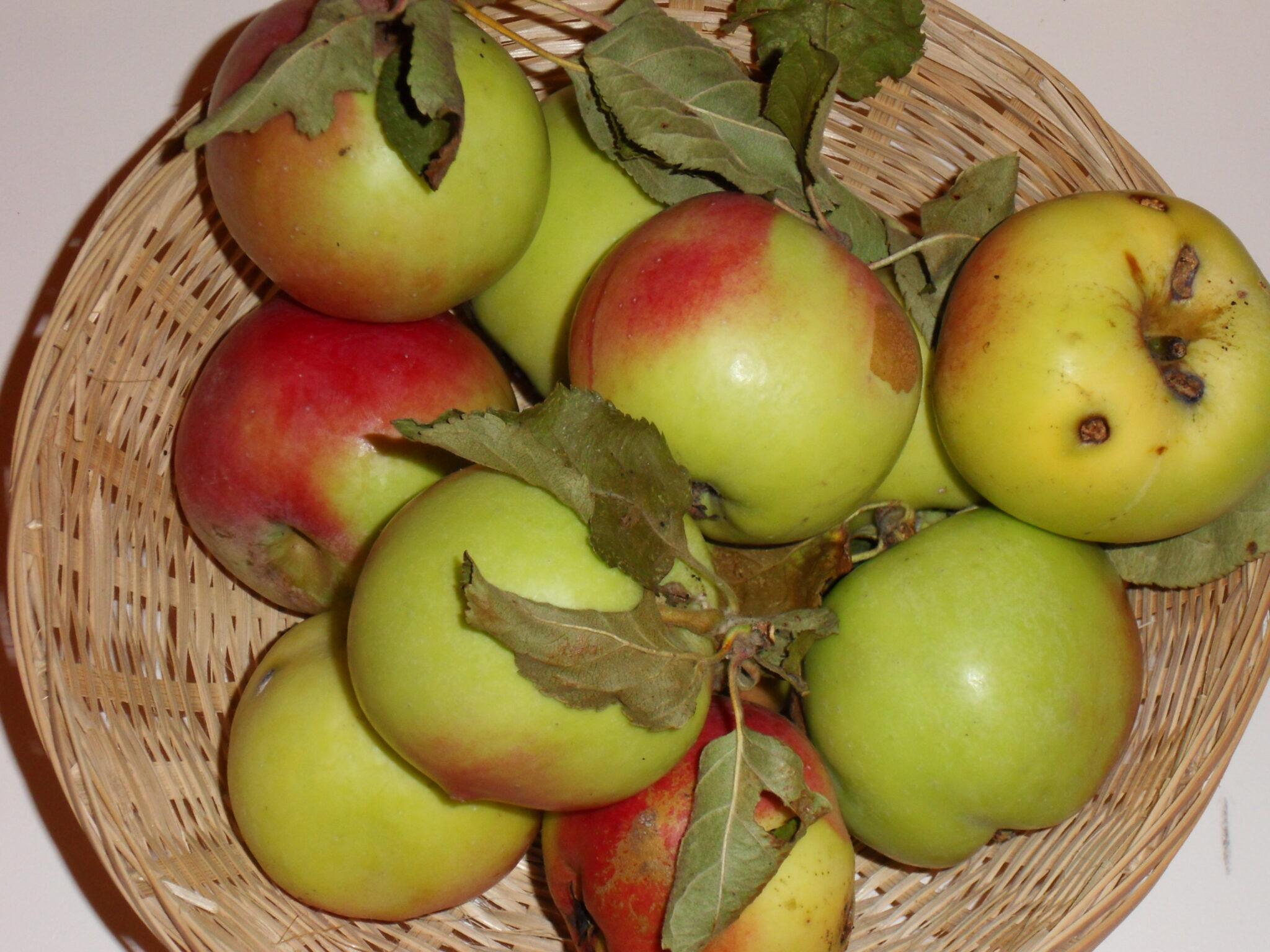 Carpo (fruit).