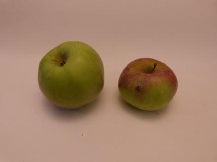 Cézilly n°11 b (fruit).
