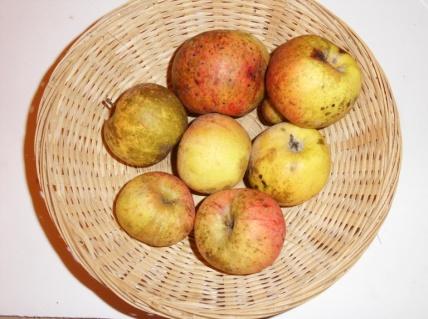 Cézilly n°9 (fruit).