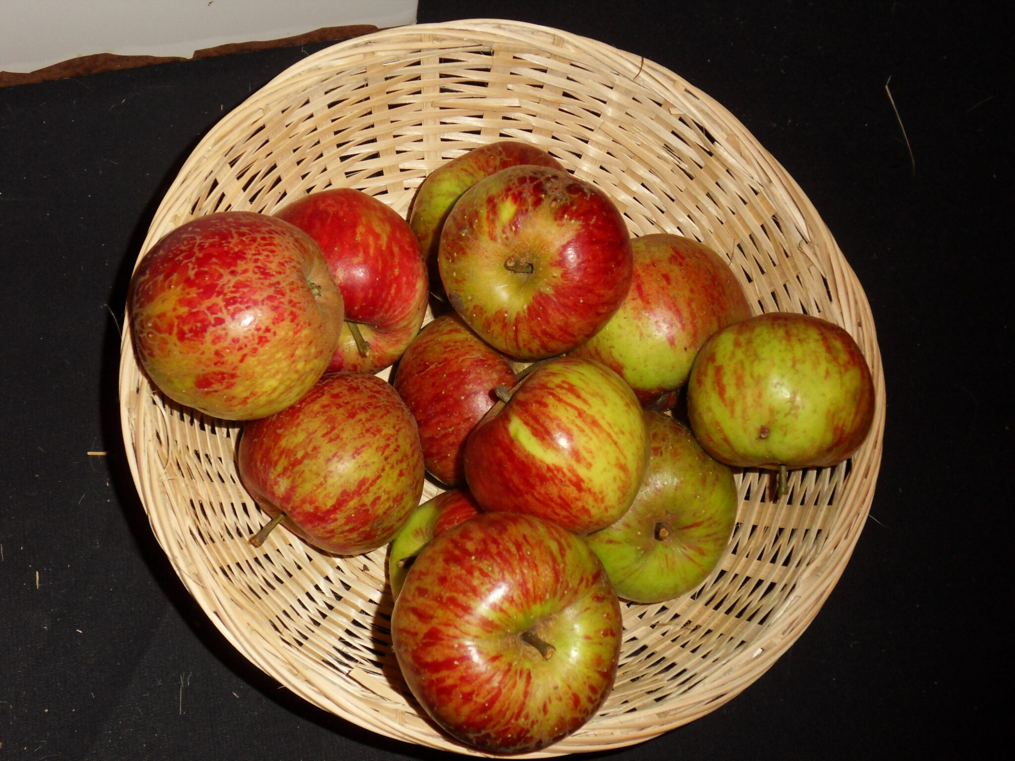 Chailleux 2 (fruit).