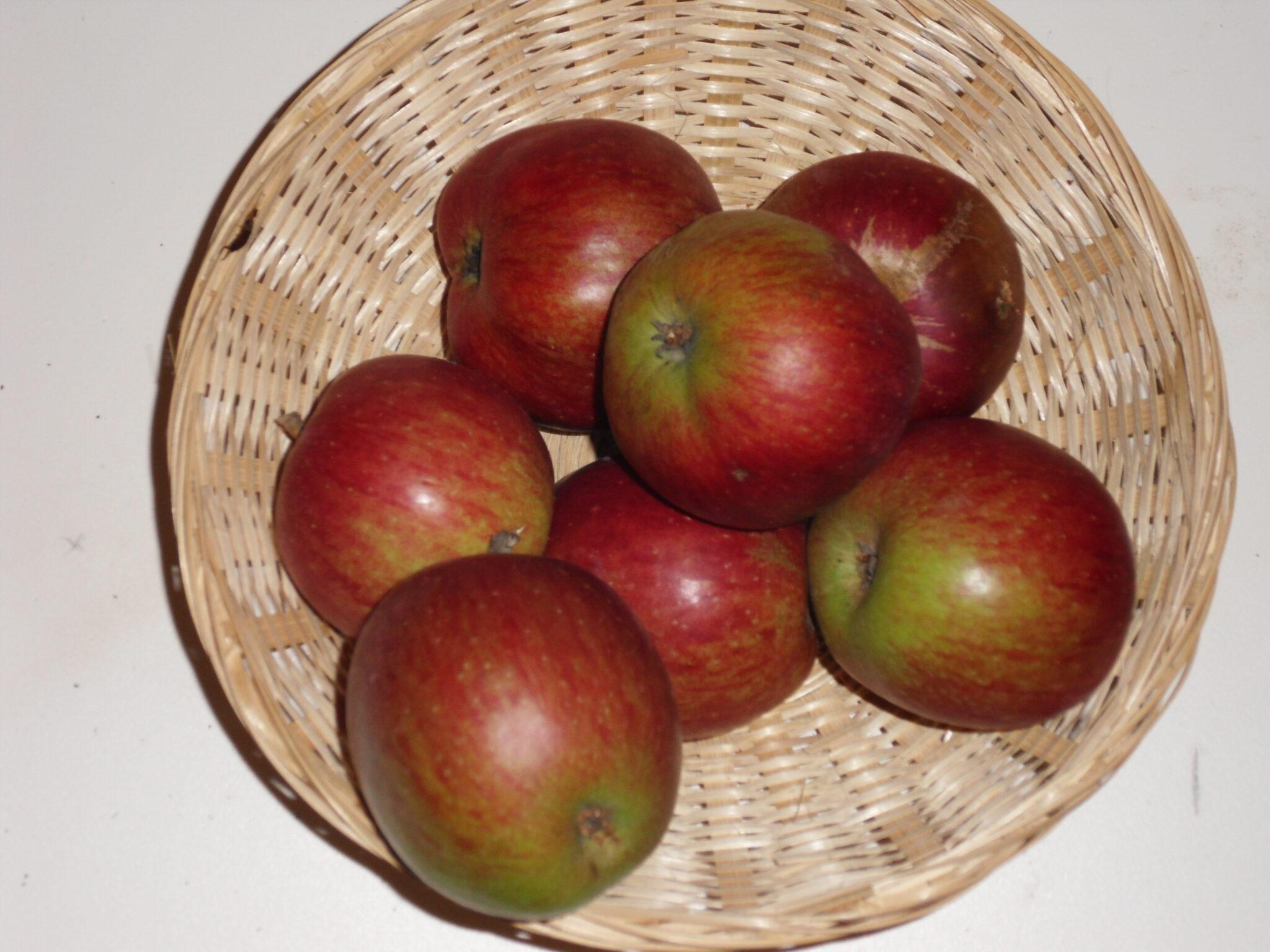 Curé de Bray 1 (fruit).