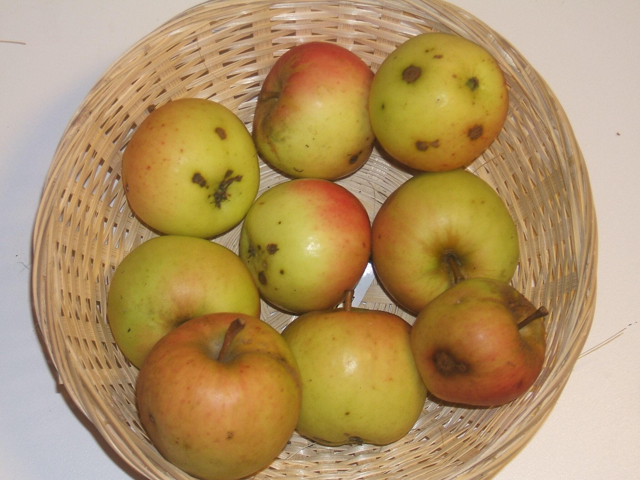 DeBoué (fruit).