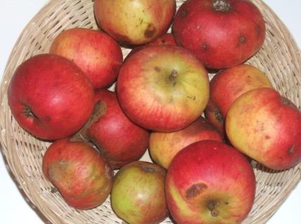 Domaines (fruit).