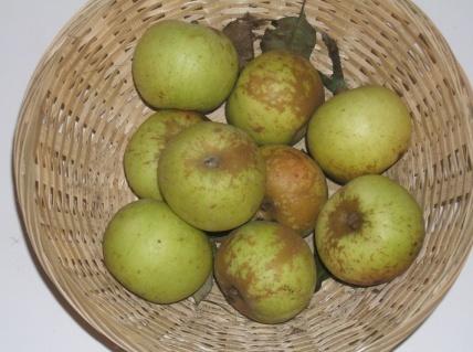 Doux amer 1 (fruit).