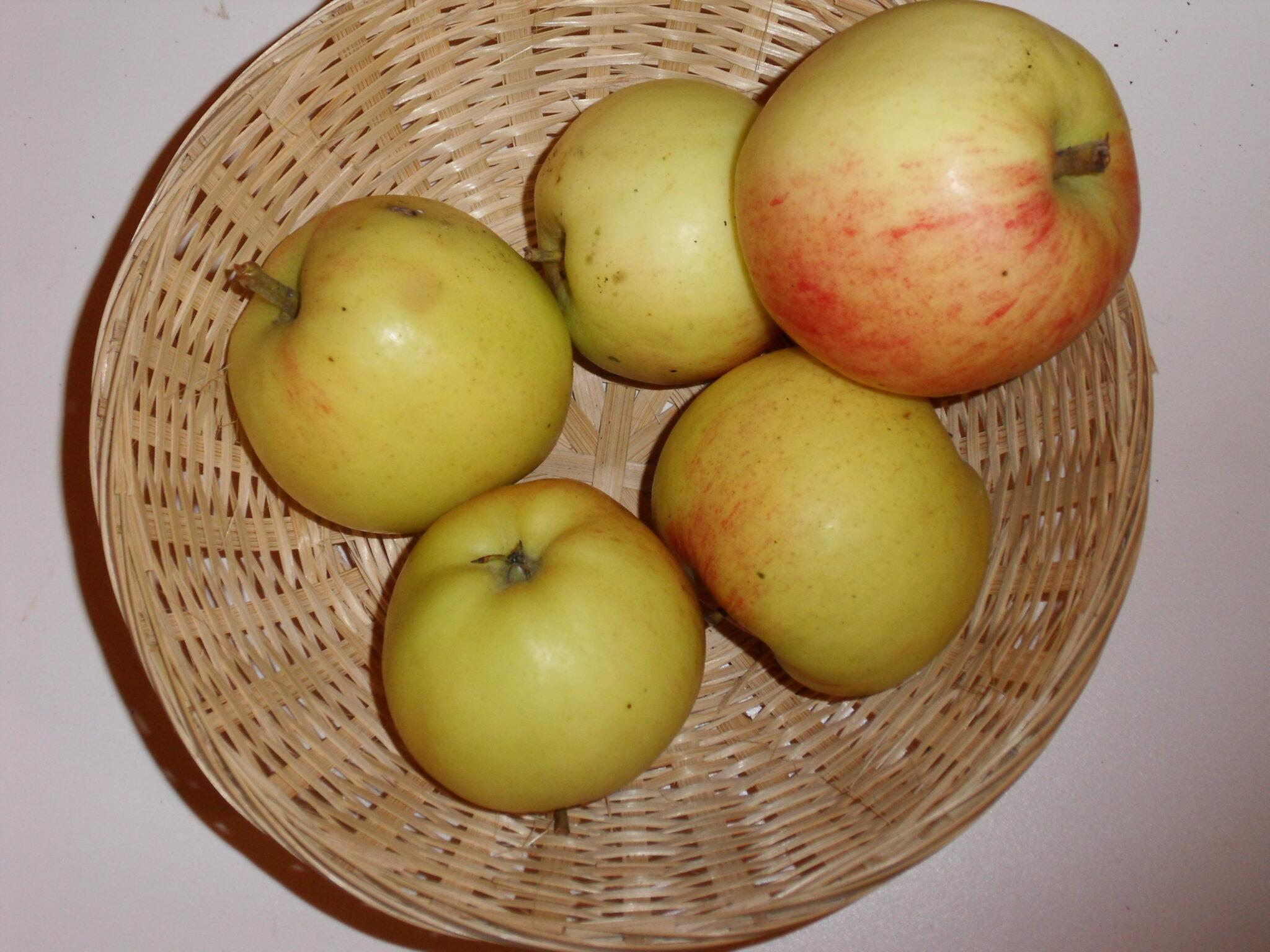 Doux d'Argent (fruit).