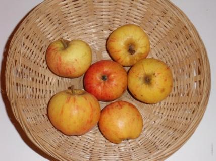 Doux Evêque (fruit).