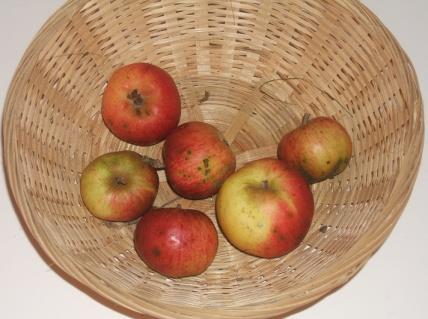 Doux Lozon (fruit).