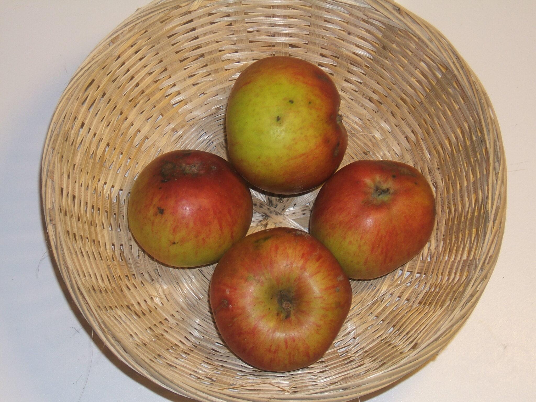 Doux Vérêt Gros 1 (fruit).