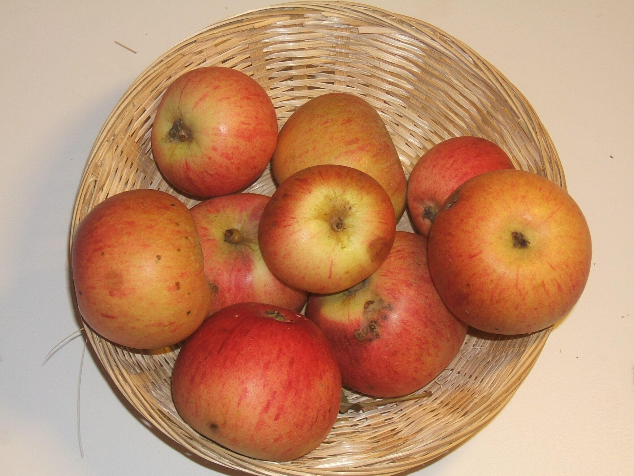 Egyptiae (fruit).