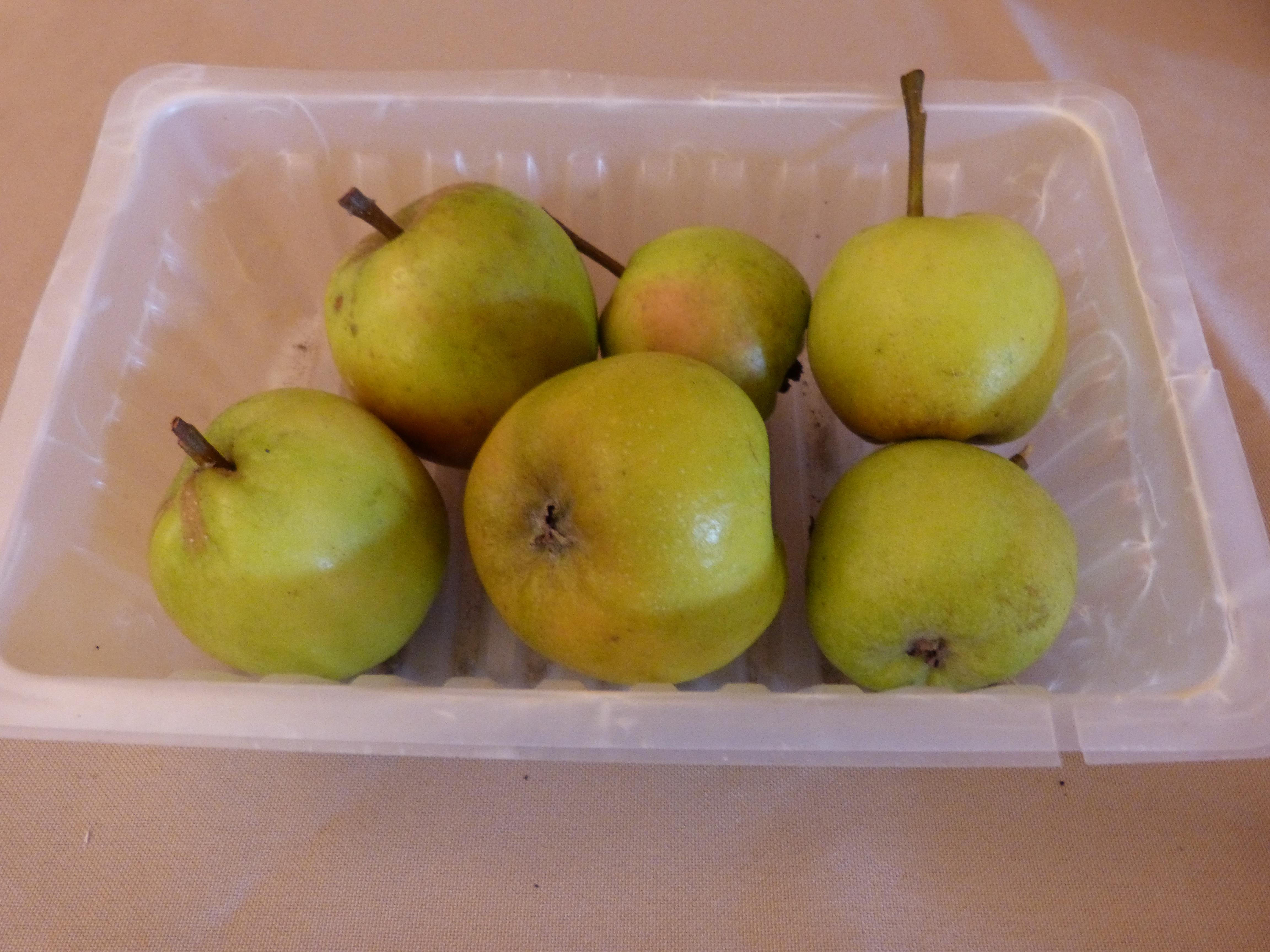 Férat blanc 2 (fruit).