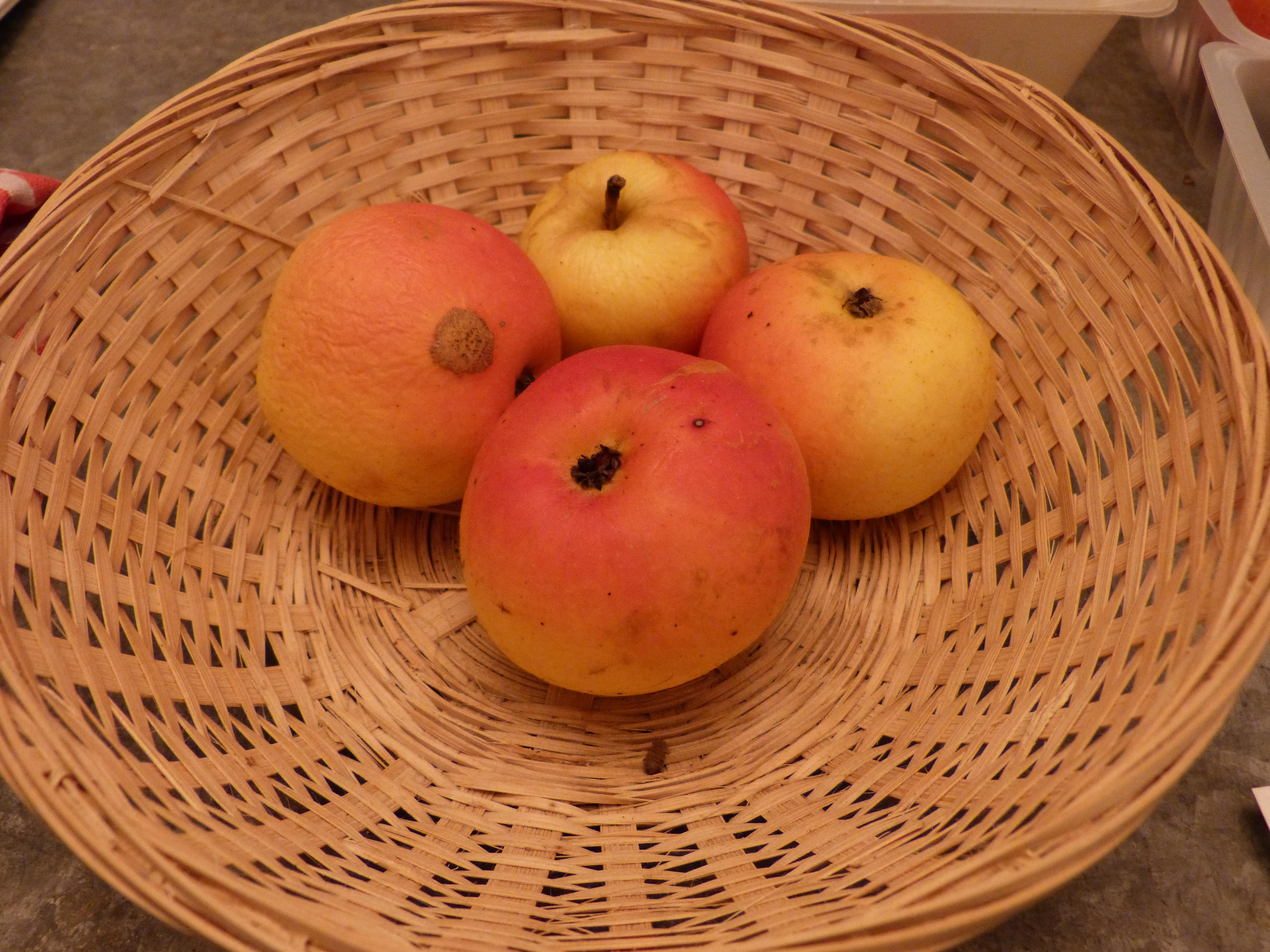 Fleur de mai (fruit).