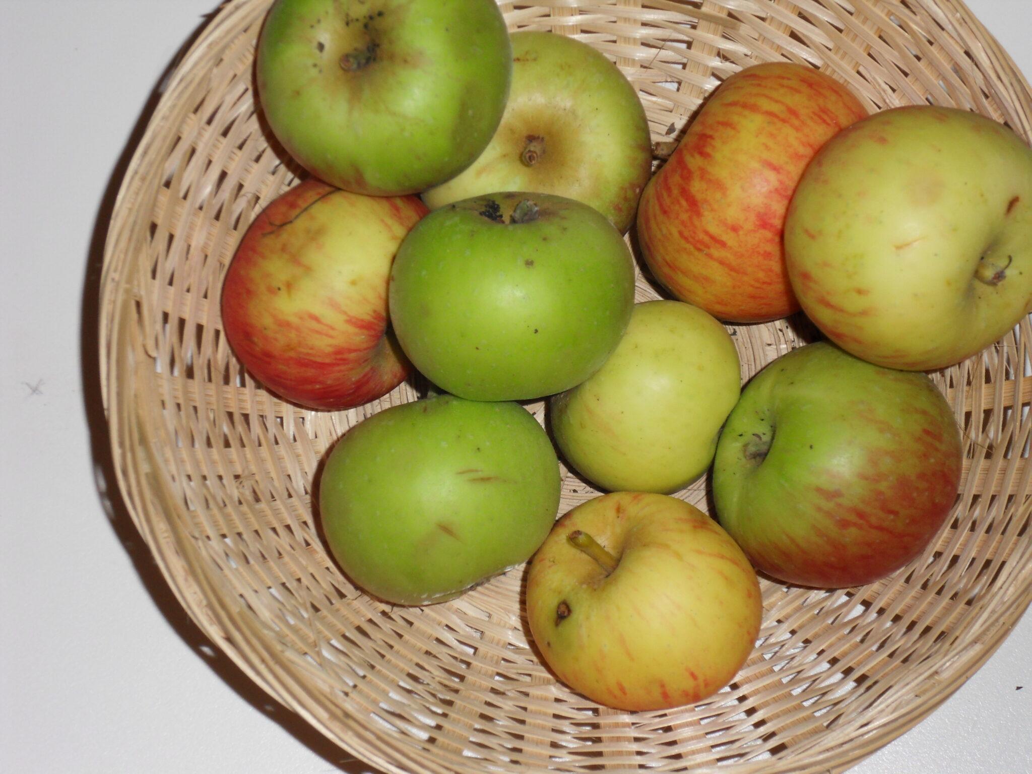 Fréquin gros (fruit).