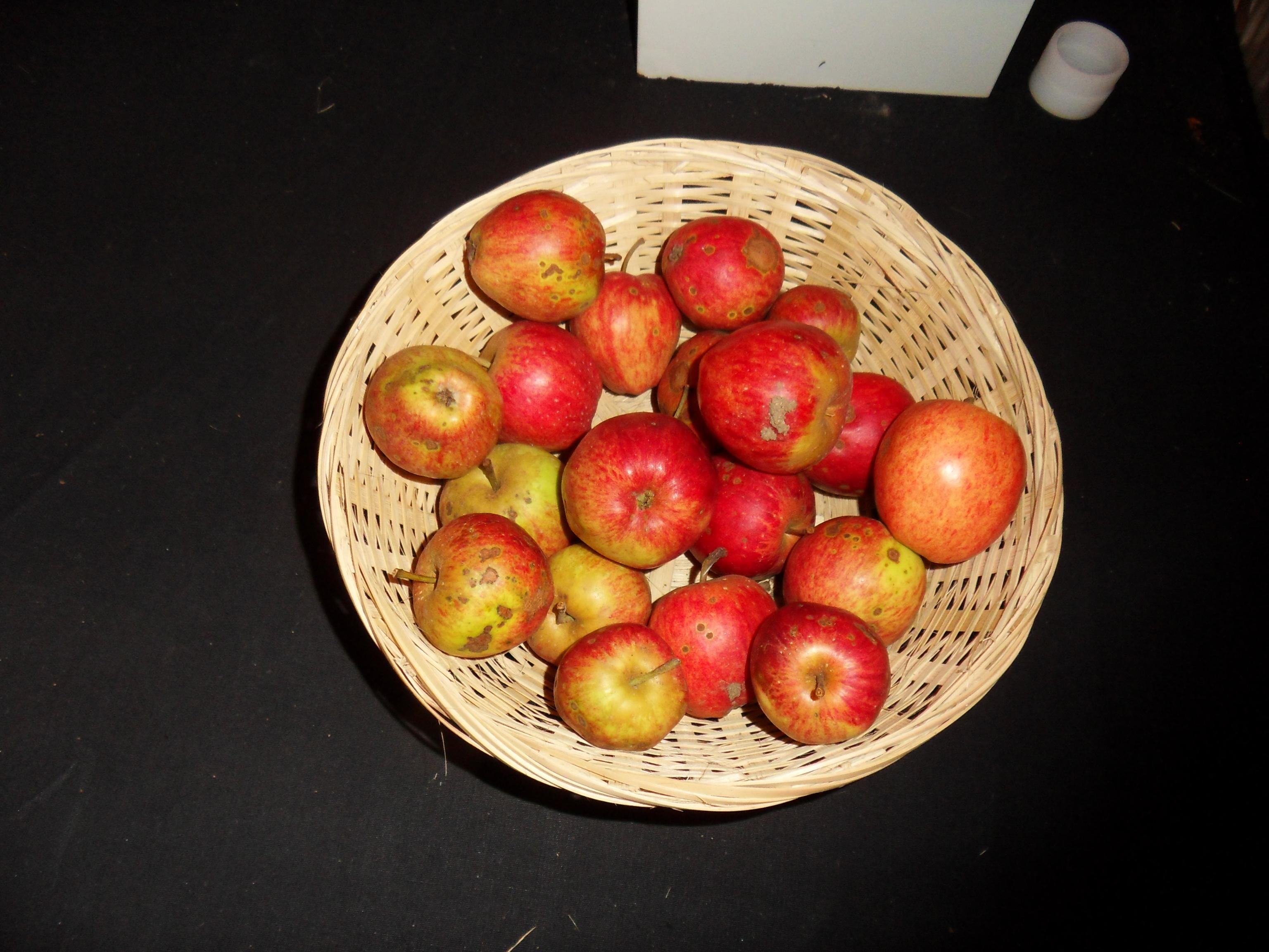Fréquin rouge 1 (fruit).