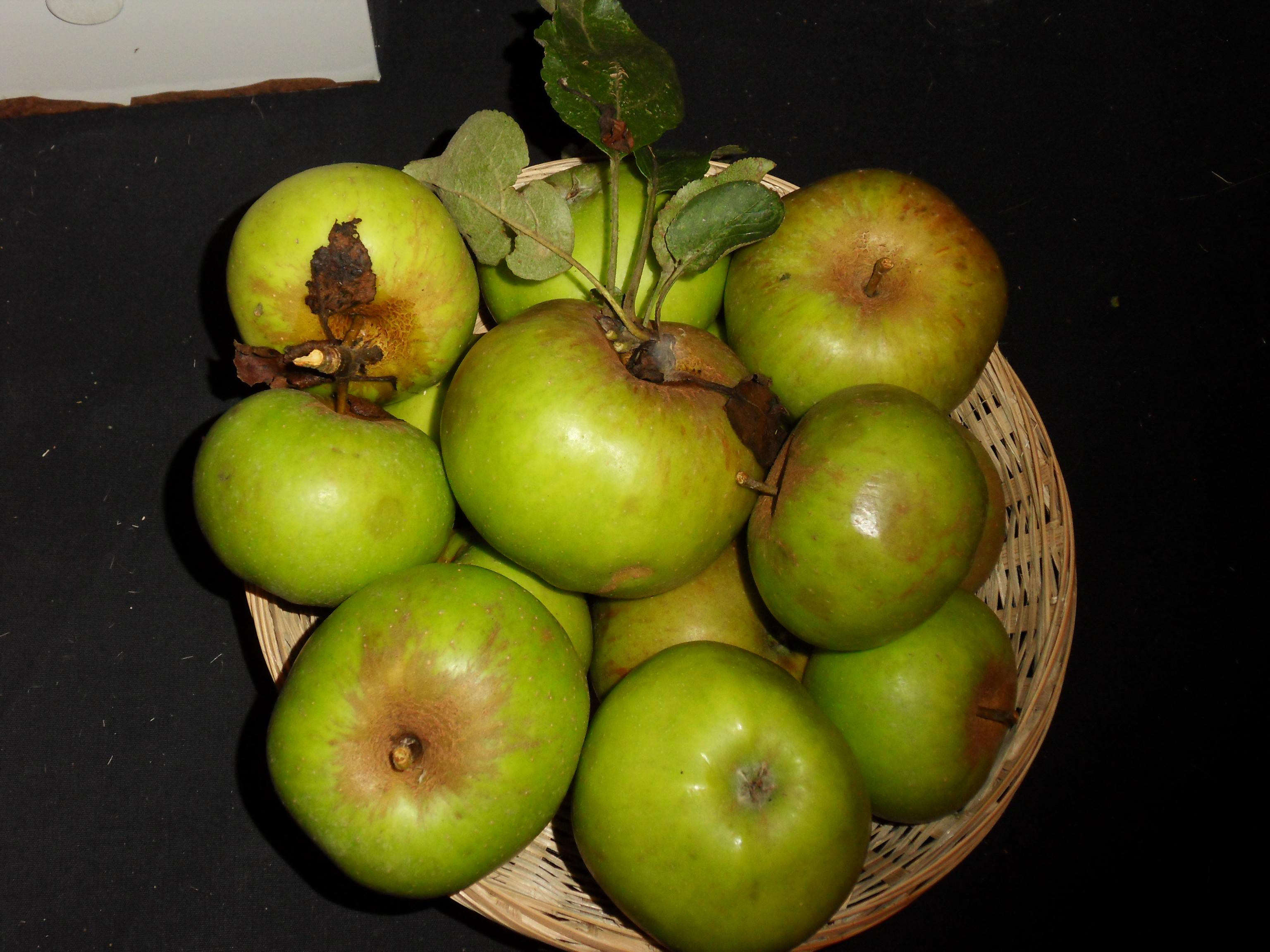 Germaine de Braspart (fruit).