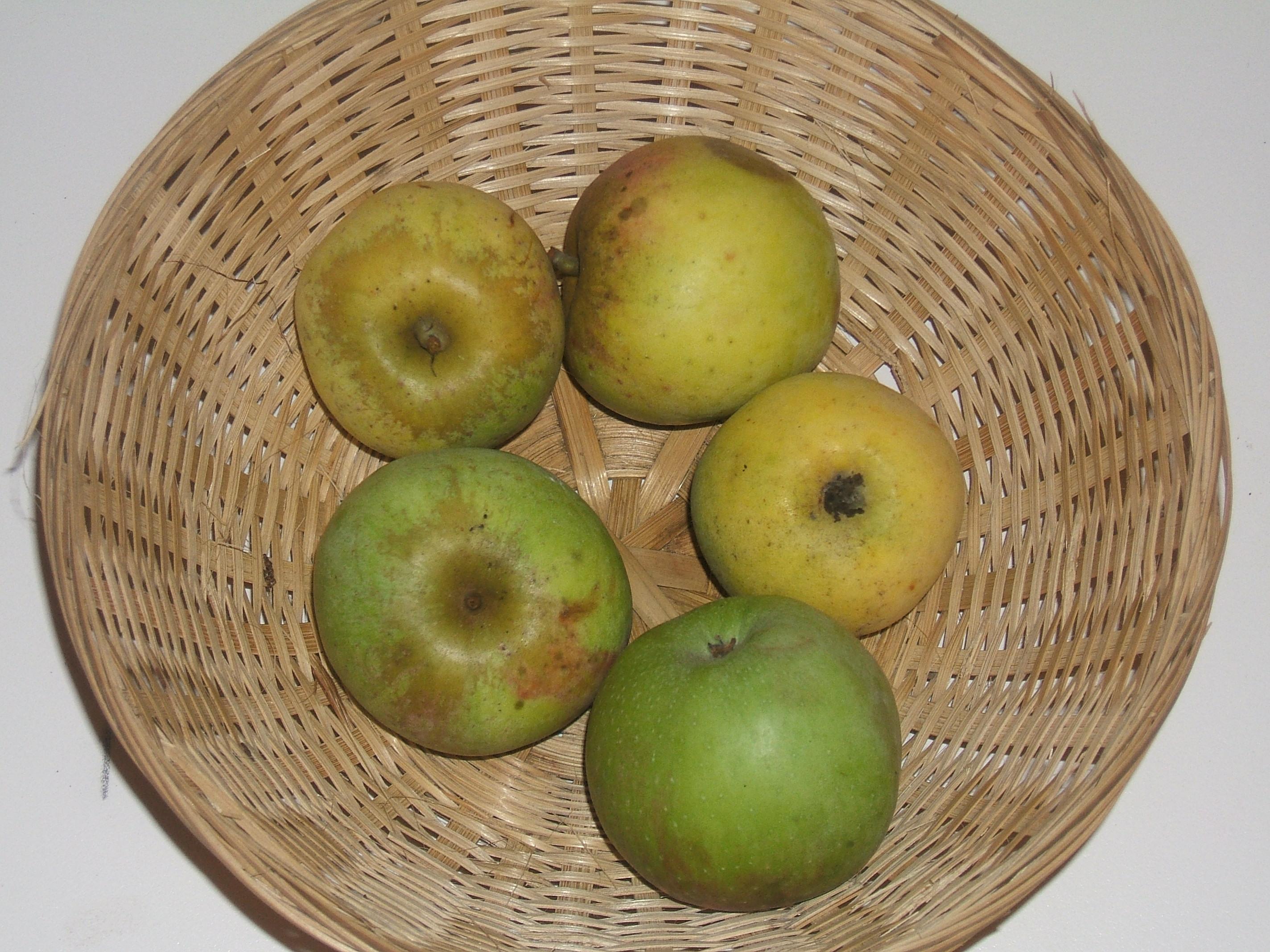Gobelot (fruit).