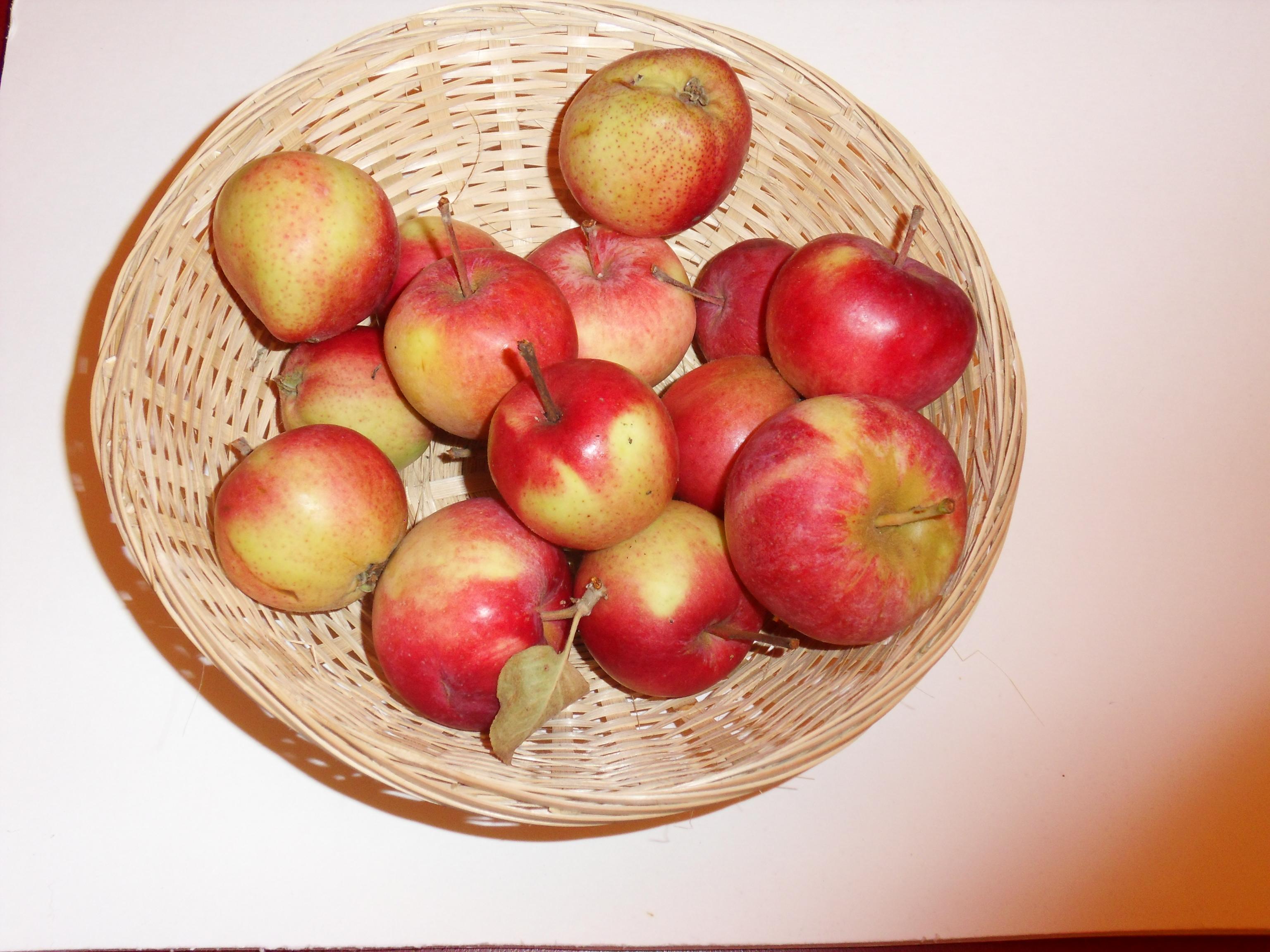 Grand Alexandre (fruit).