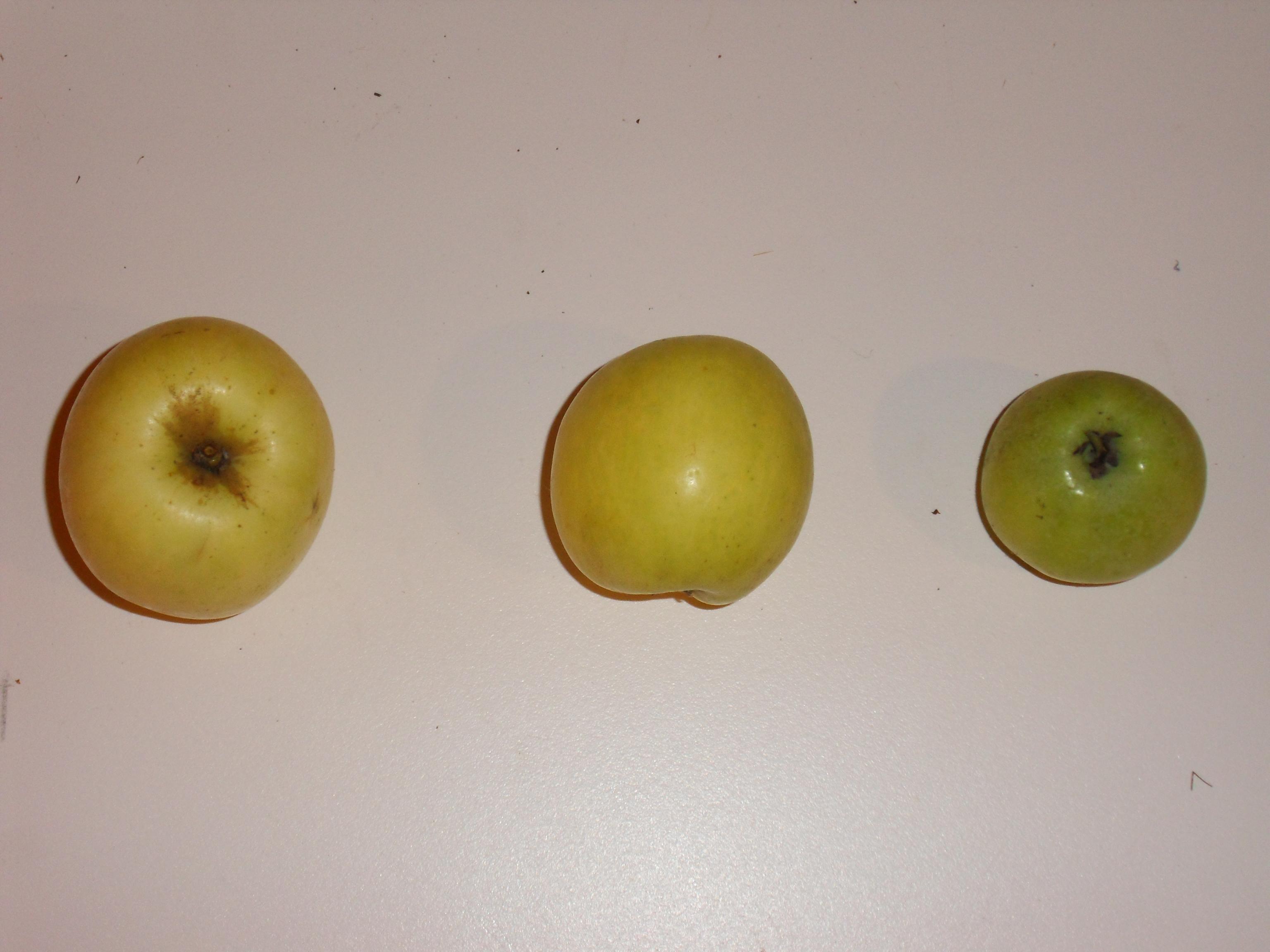 Gravenstein jaune (fruit).