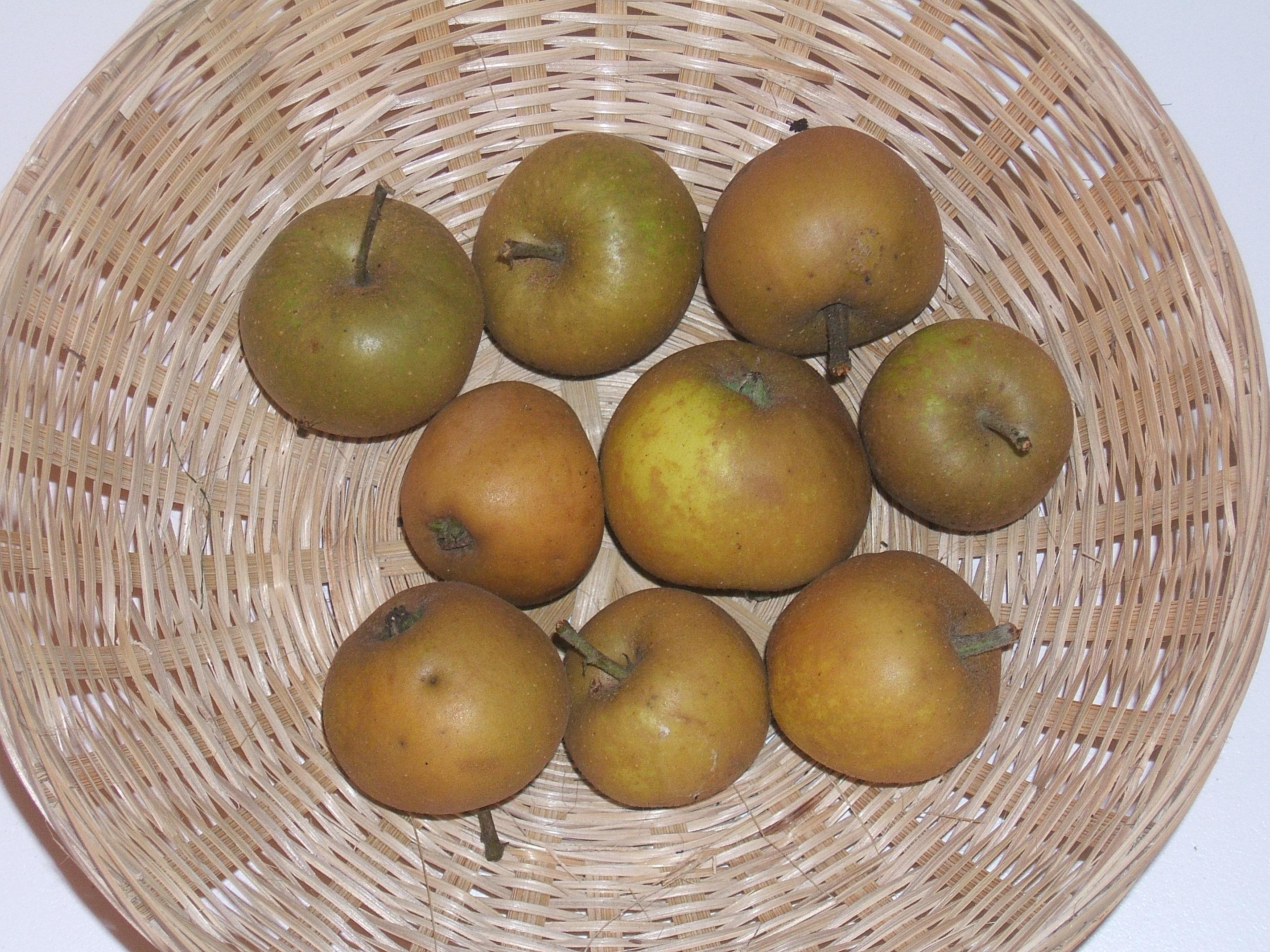 Grise Dieppois 1 (fruit).
