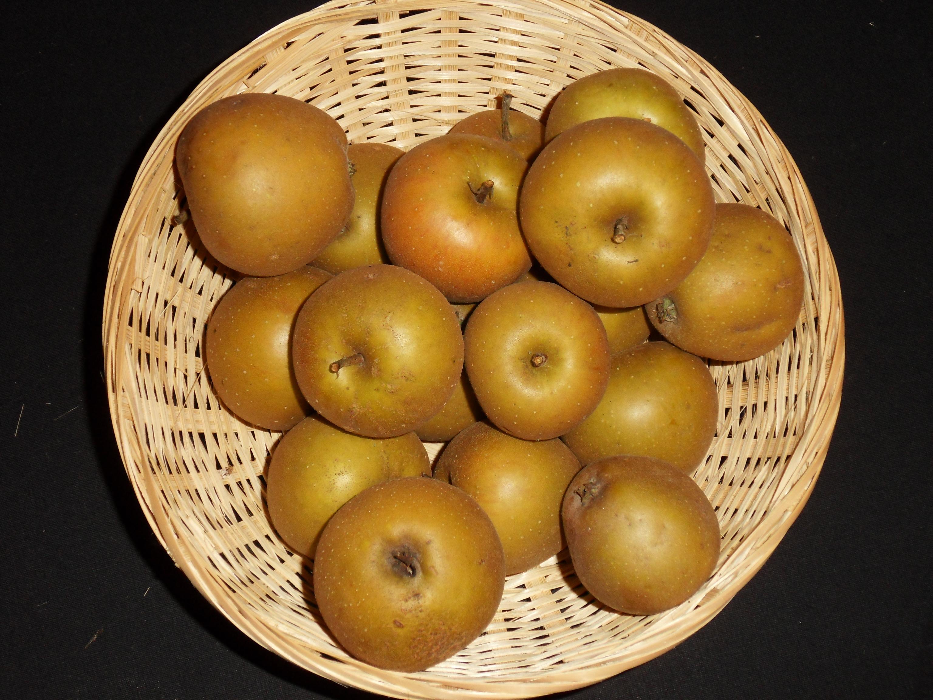 Grise Foulongne (fruit).