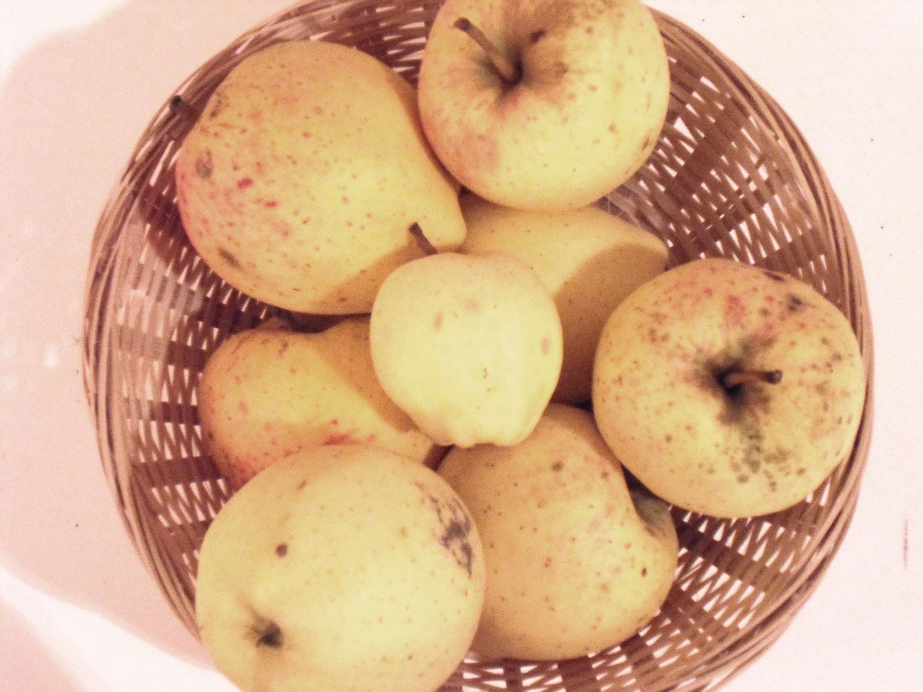 Gros Pigeonnet (fruit).