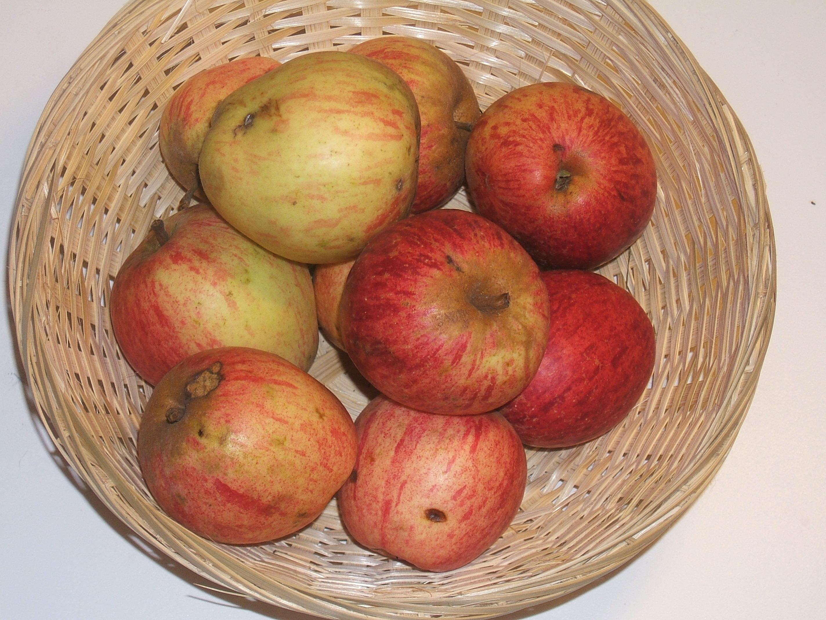 Gros roquet (fruit).