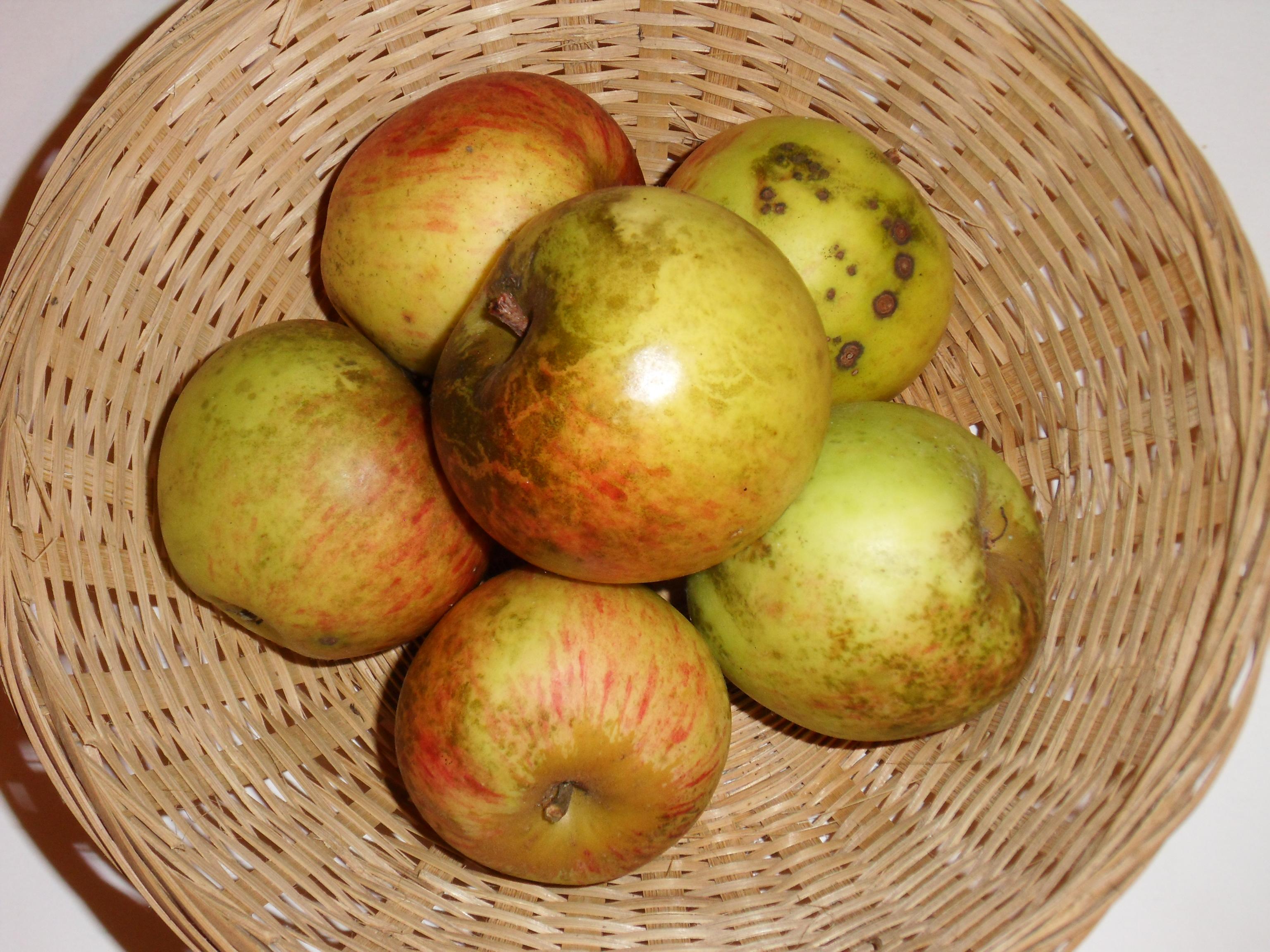 Gros Vert 1 (fruit).