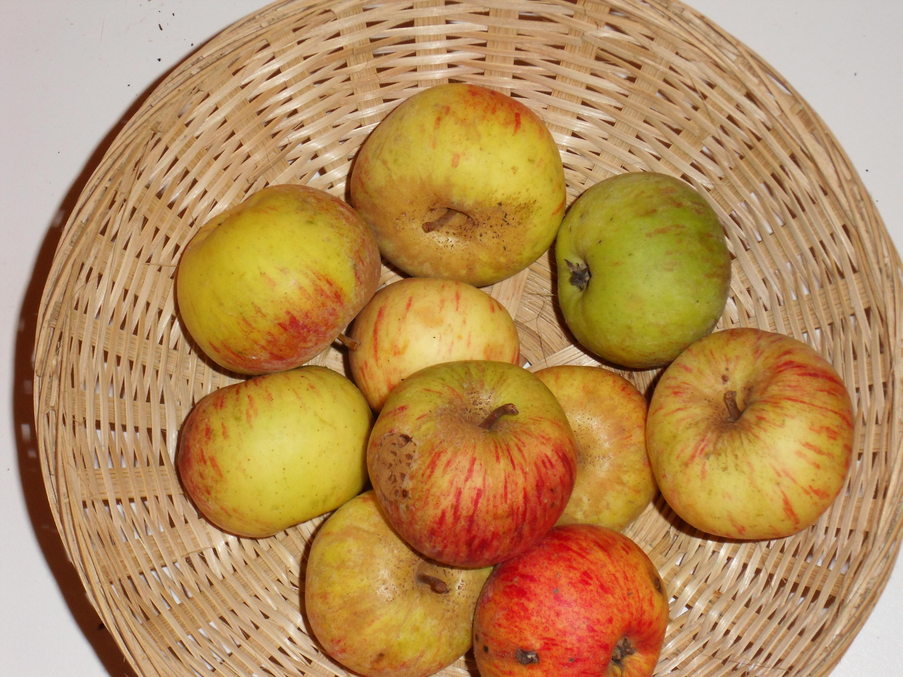 Hauchecorne (fruit).