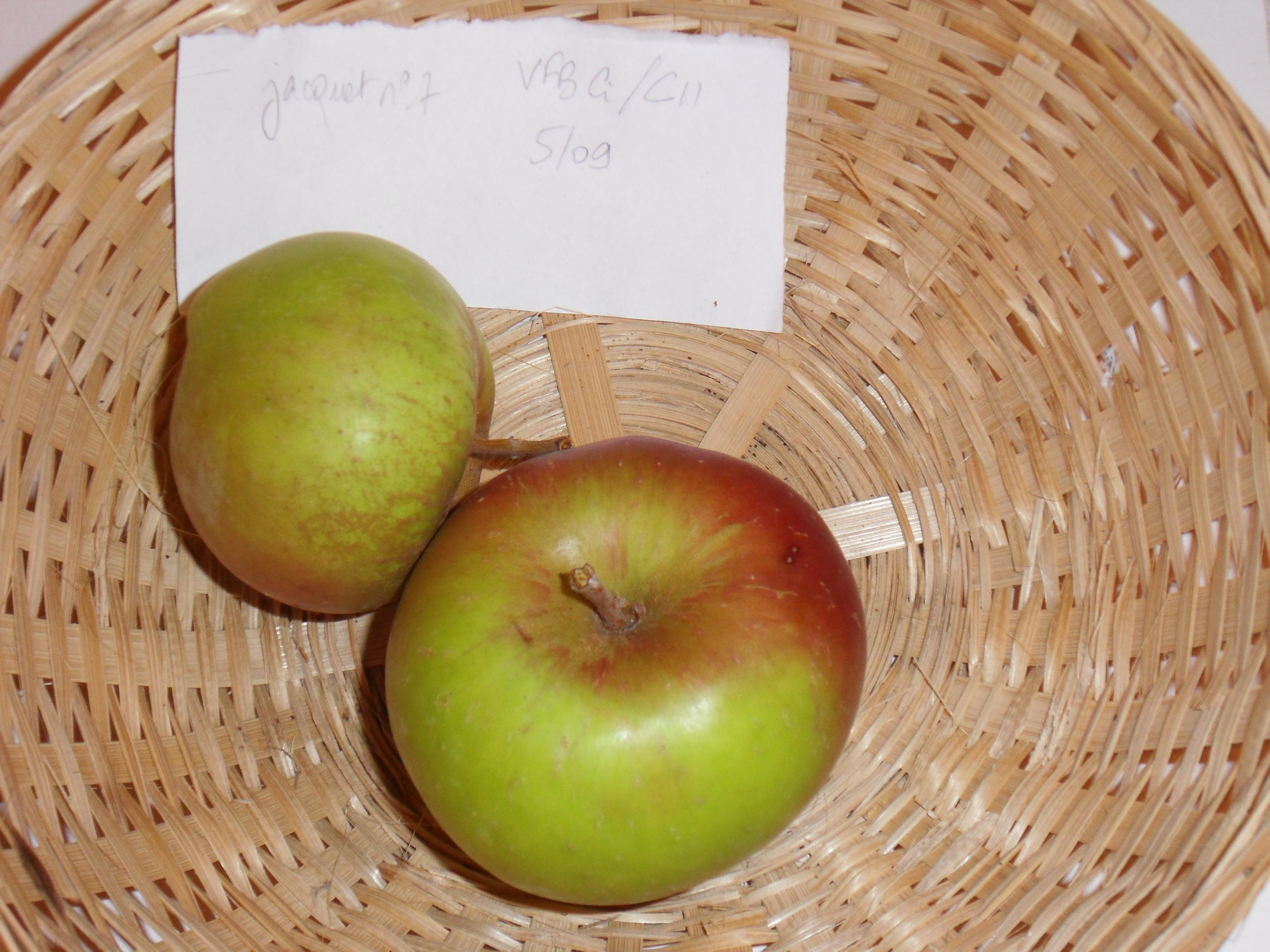 Jacquet n°7 (fruit).