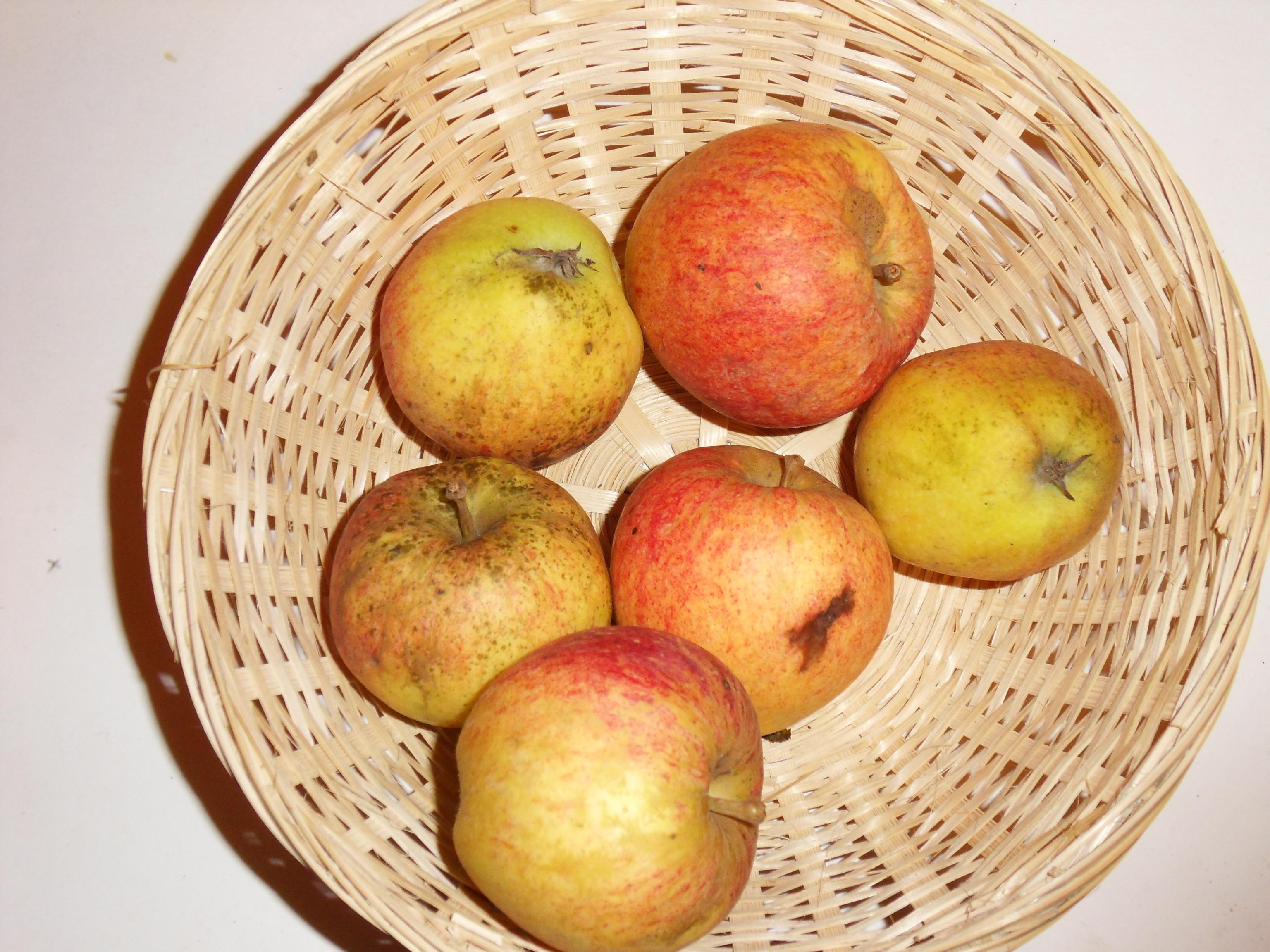 James Grieve (fruit).