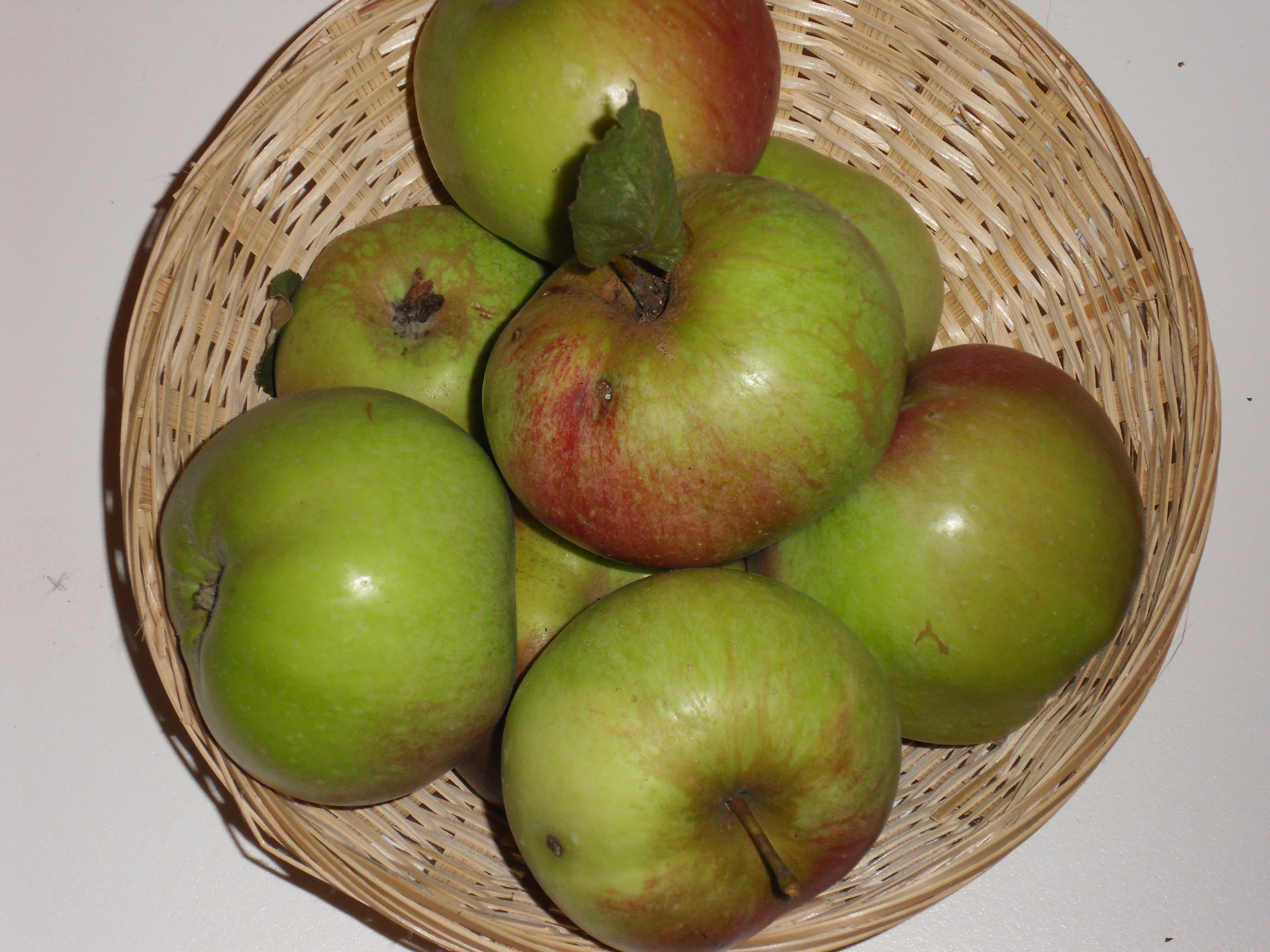 Lanscailler (fruit).