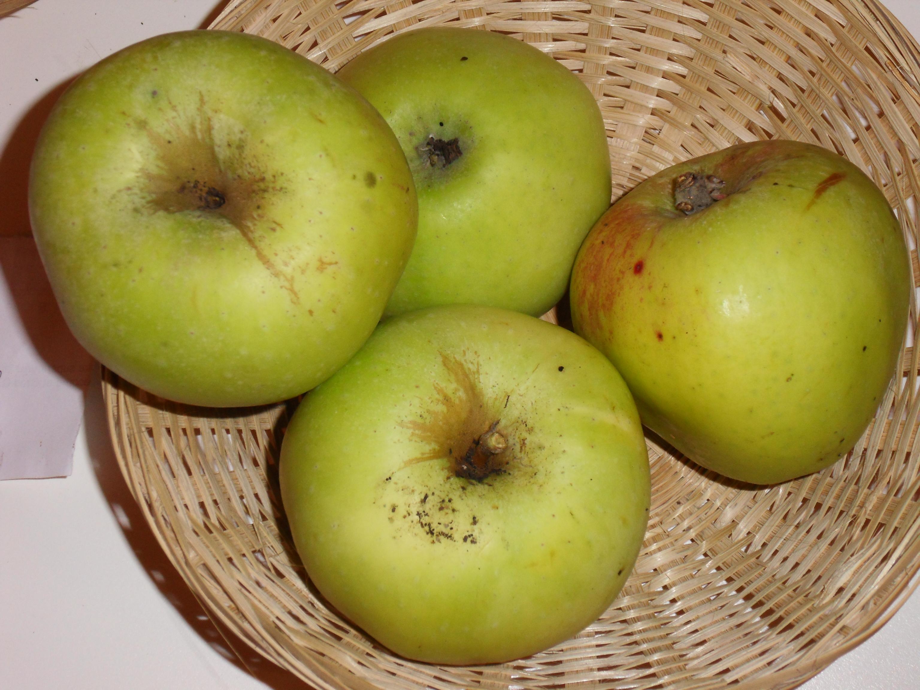 Marie Doudou 1 (fruit).