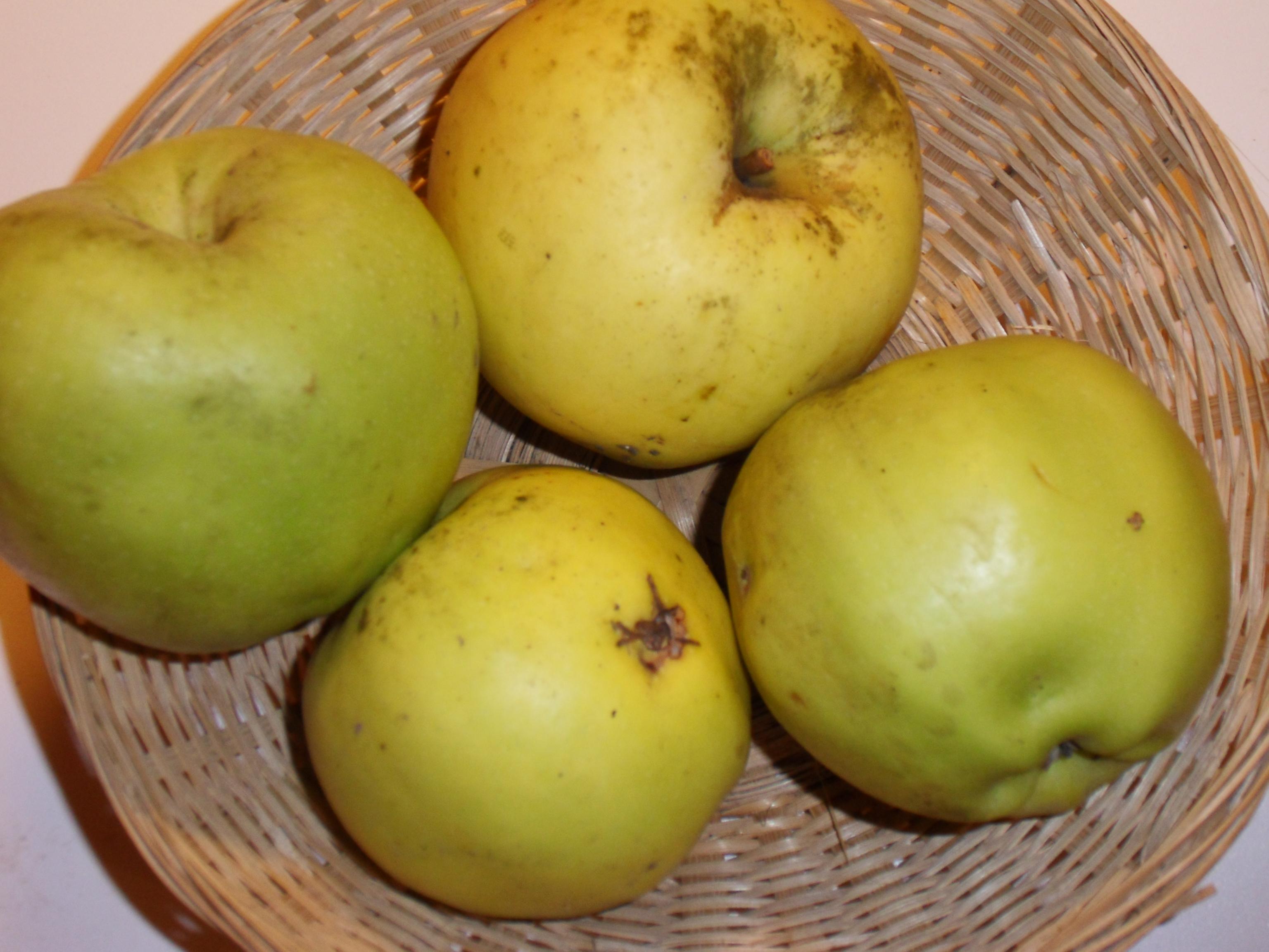 Ménagère 2 (fruit).