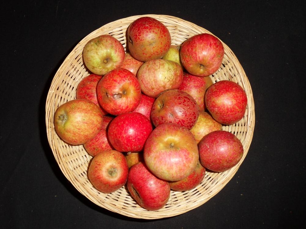 Mettais (fruit).