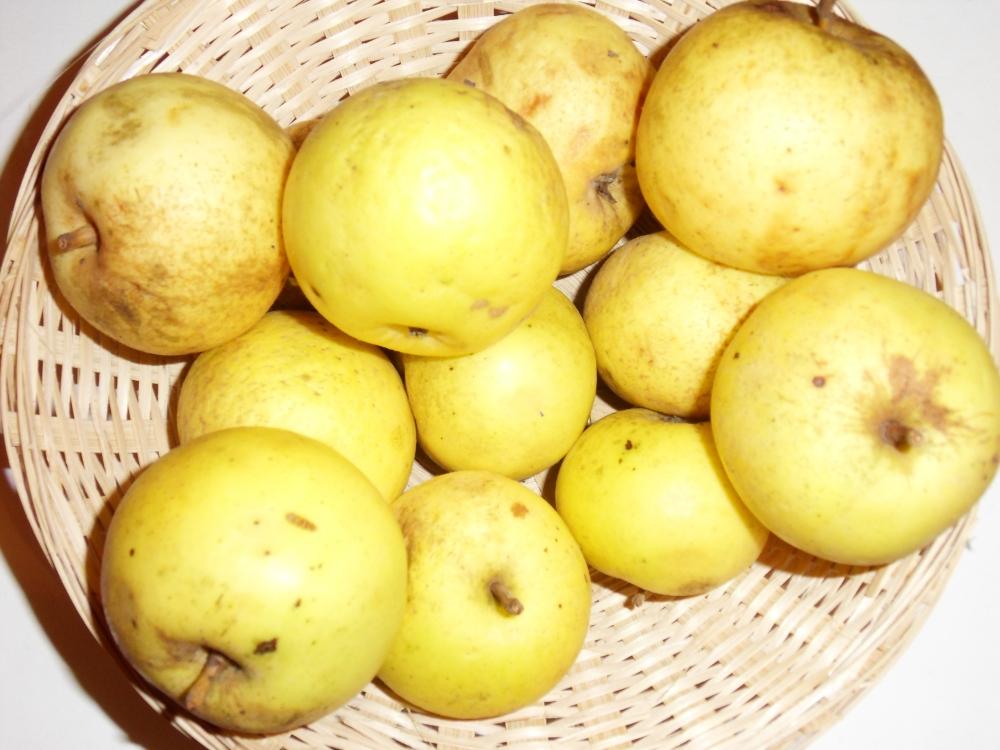 Muscadet de Brémontier (fruit).