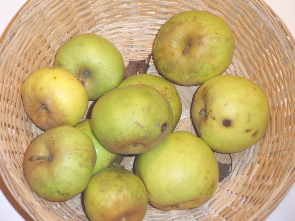 Muscadet de Dieppe (fruit).