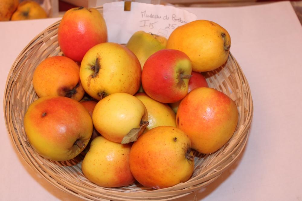 Museau de Brebis (fruit).