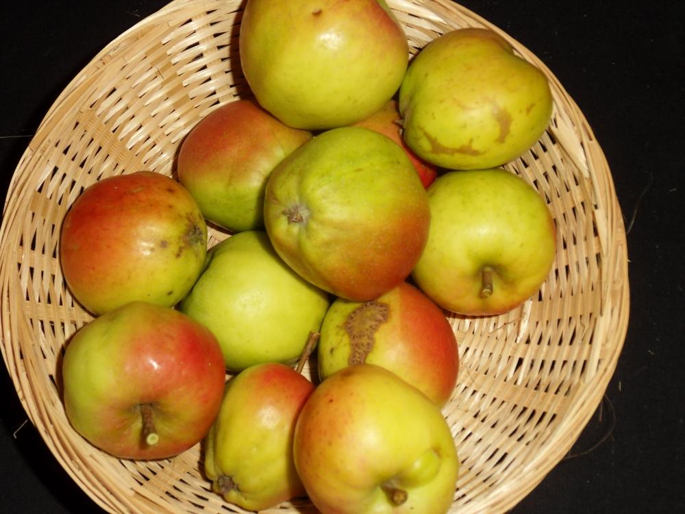 Muselet Tardif (fruit).