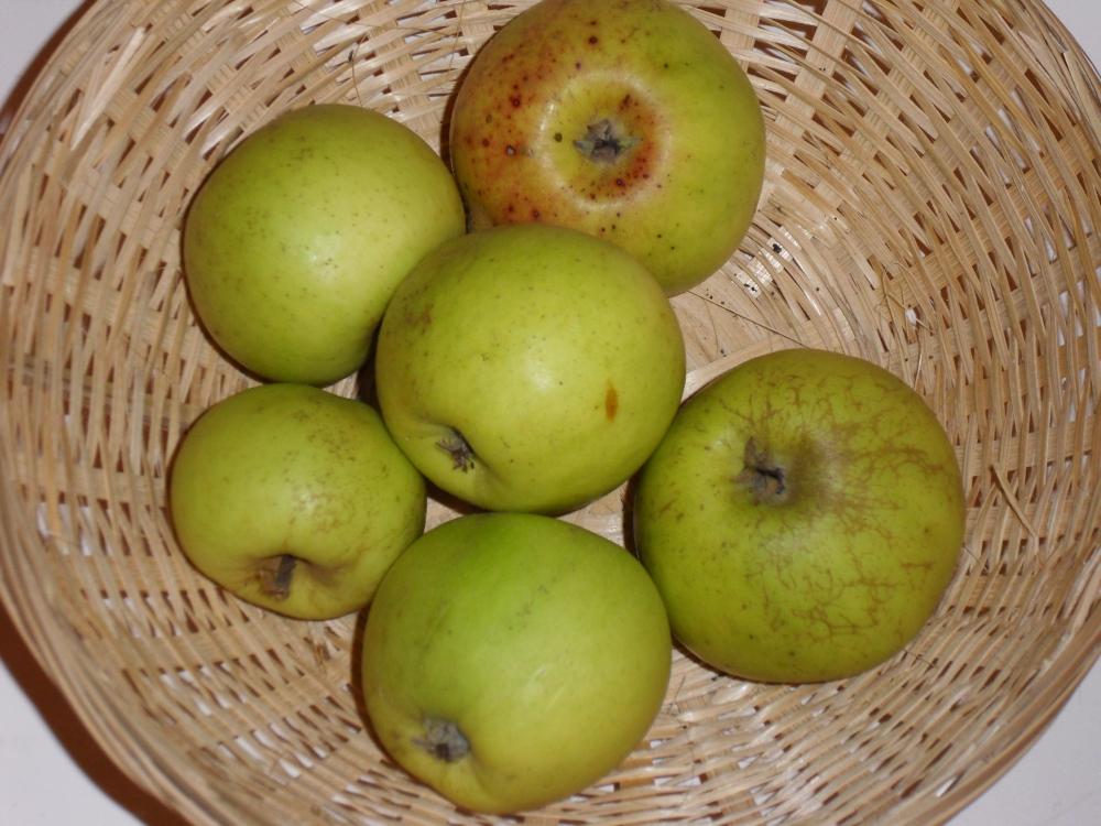 Nehou (fruit).