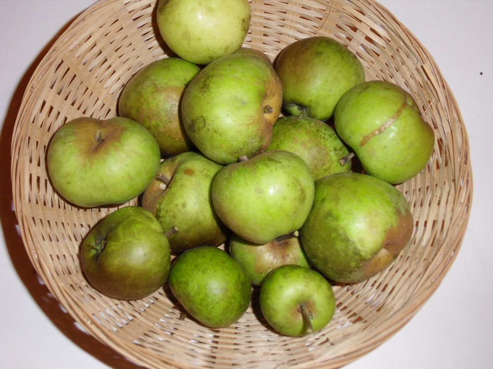 Peau de vache musquée (fruit).