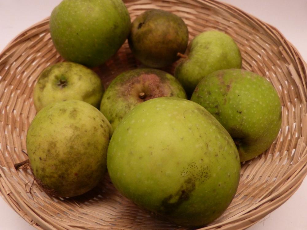 Peau de vache régénérée (fruit).