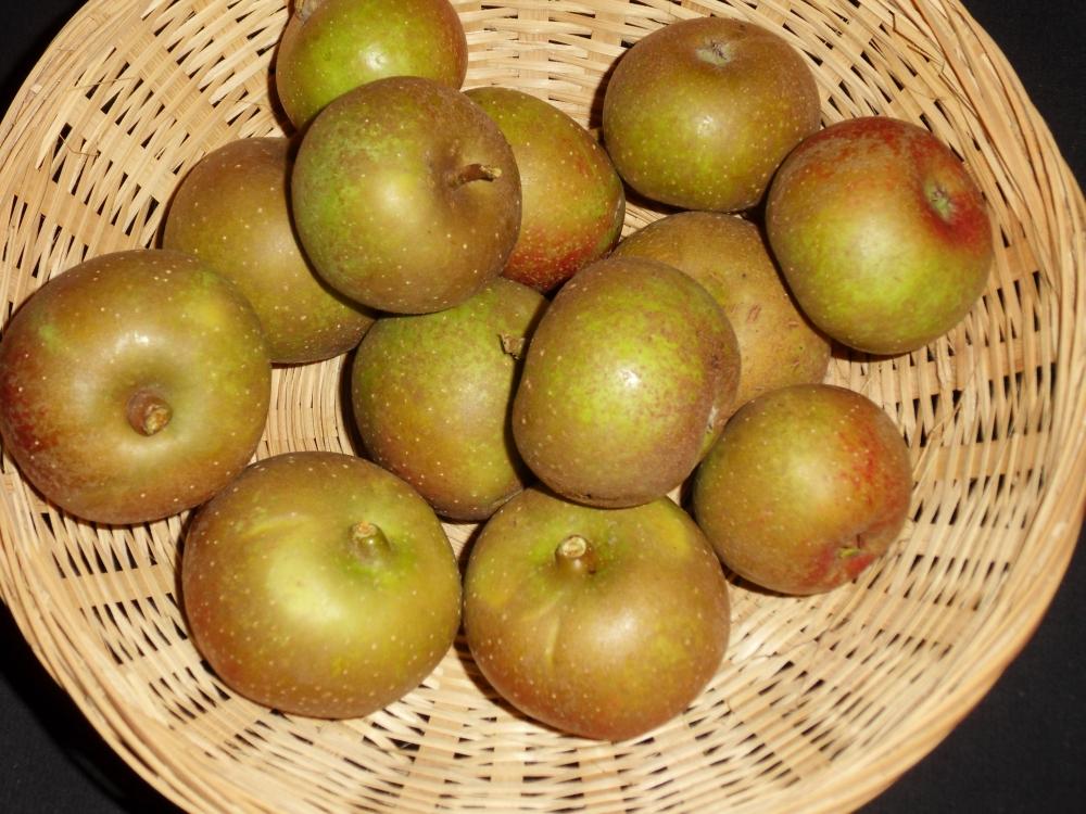 Peau de vache ancienne (fruit).
