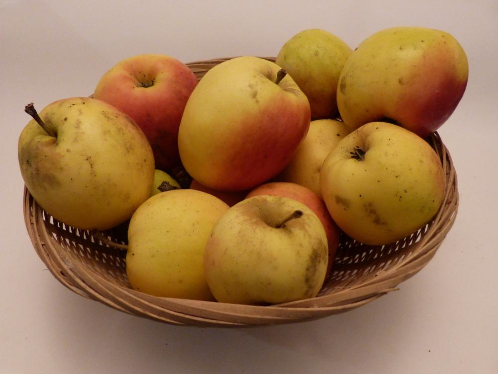 Petit Jaune (fruit).