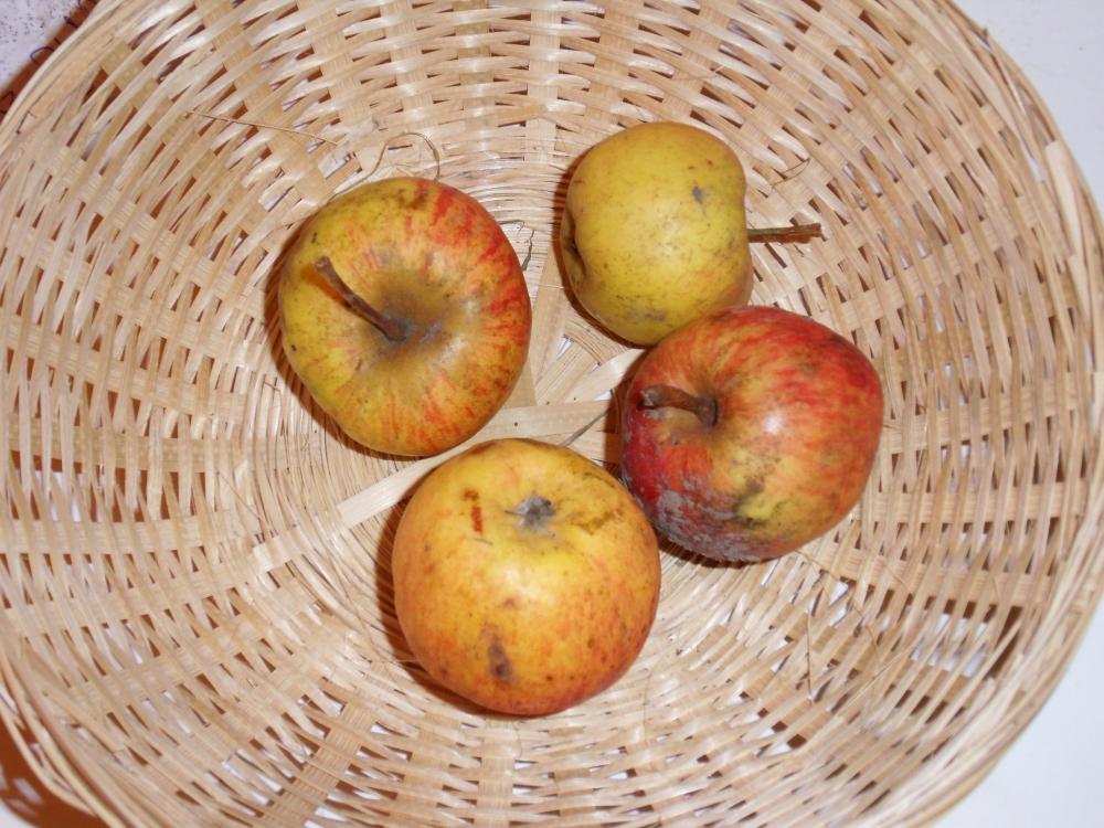 Petit Oeillet (fruit).