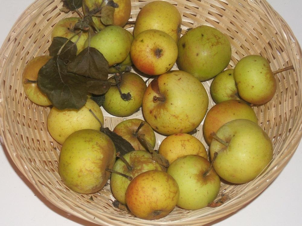Petite sorte jaune (fruit).