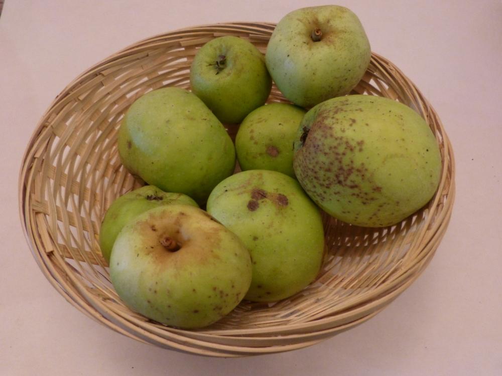 Pomme Couderc (fruit).