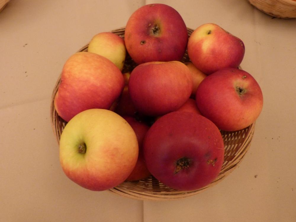 Pomme de cave