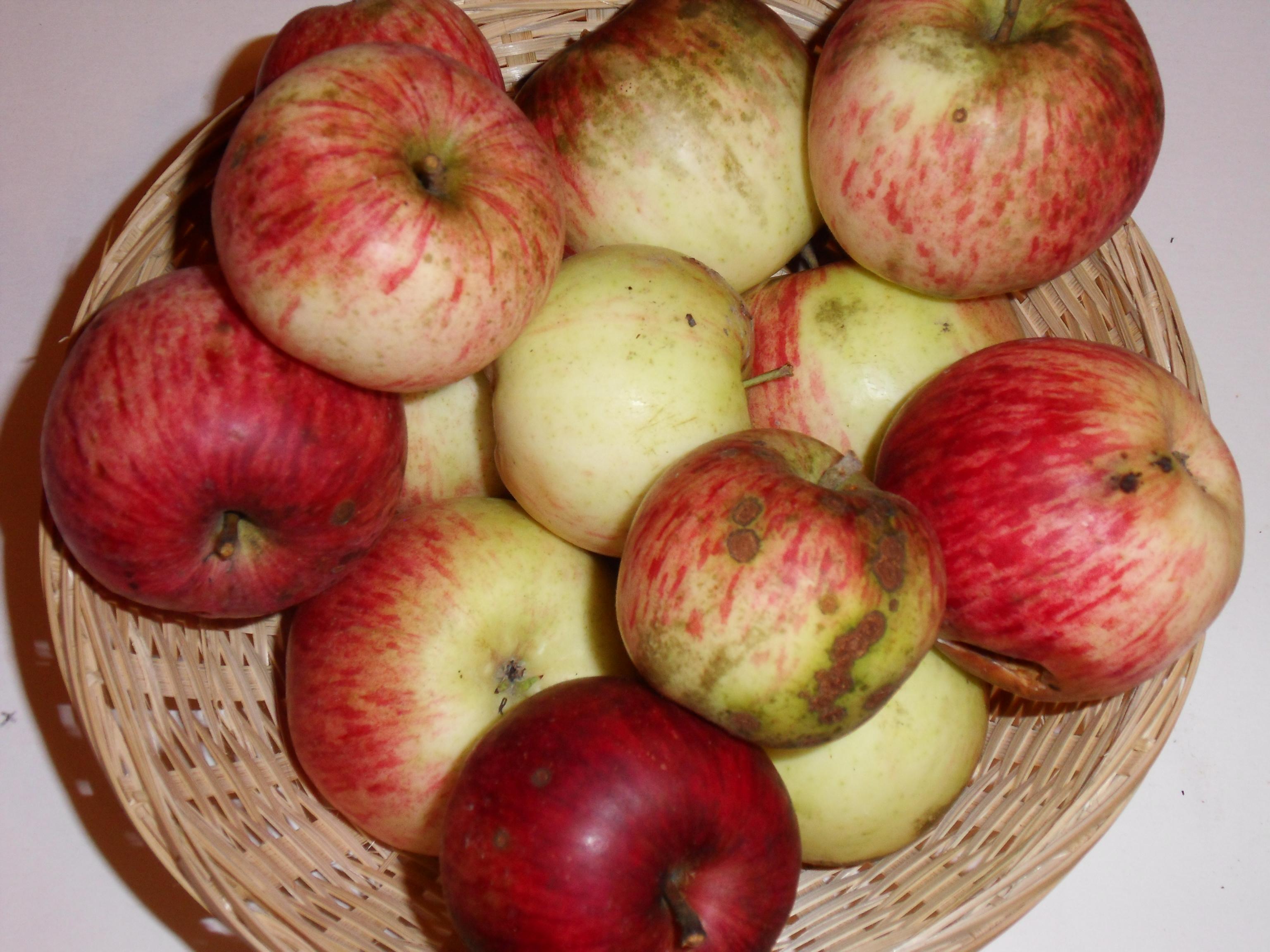 Pomme de Neige (fruit).