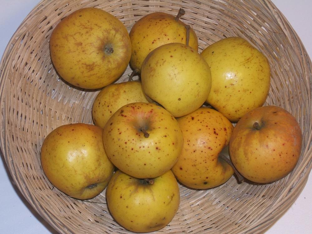 Pomme de Rouen (fruit).